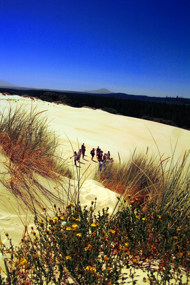 The dunes on the west coast of Tasmania.