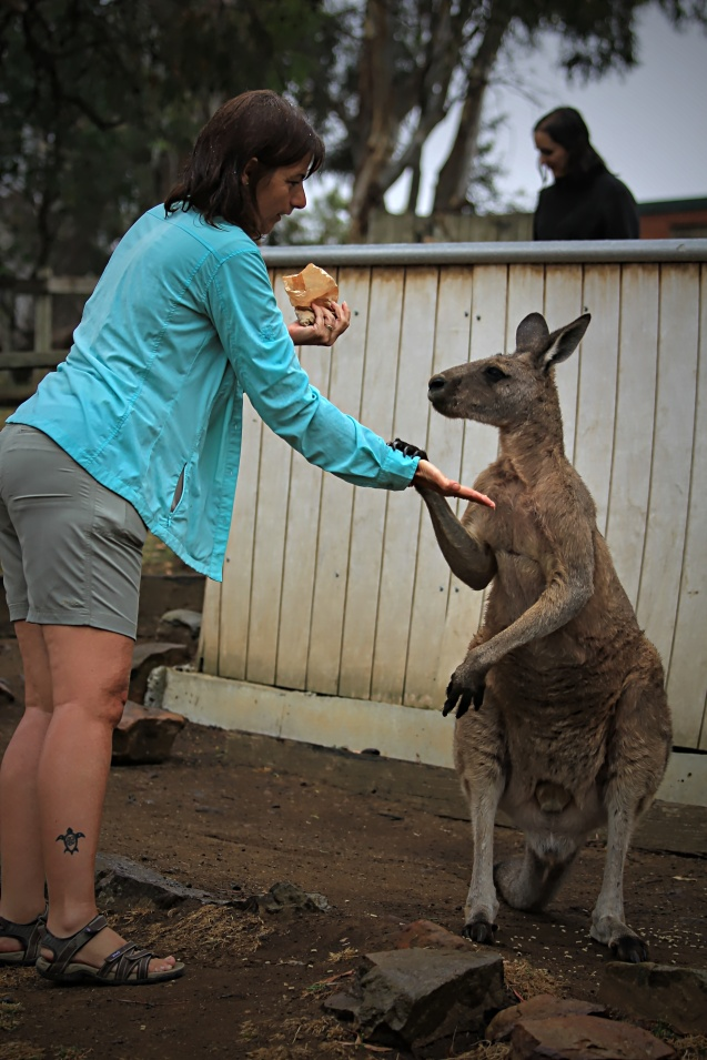 having a moment with a kangaroo