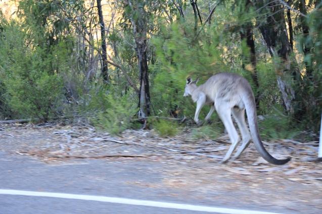 Racing a kangaroo.  The kangaroo gave up :)