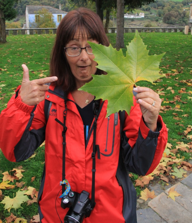 That's one humongous leaf!