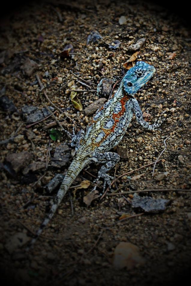 Pretty lizard