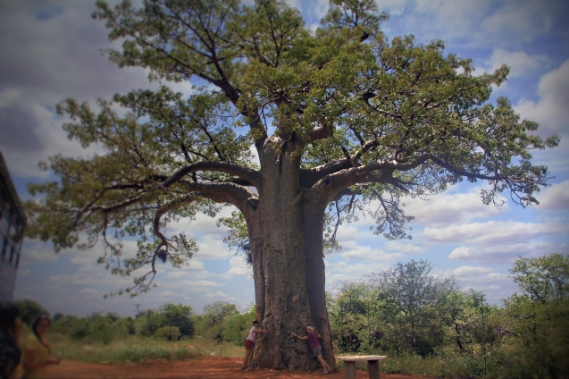 Hugging Africa's biggest and oldest baobob tree which is about 3,000 years old