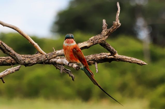 Botswana's national bird