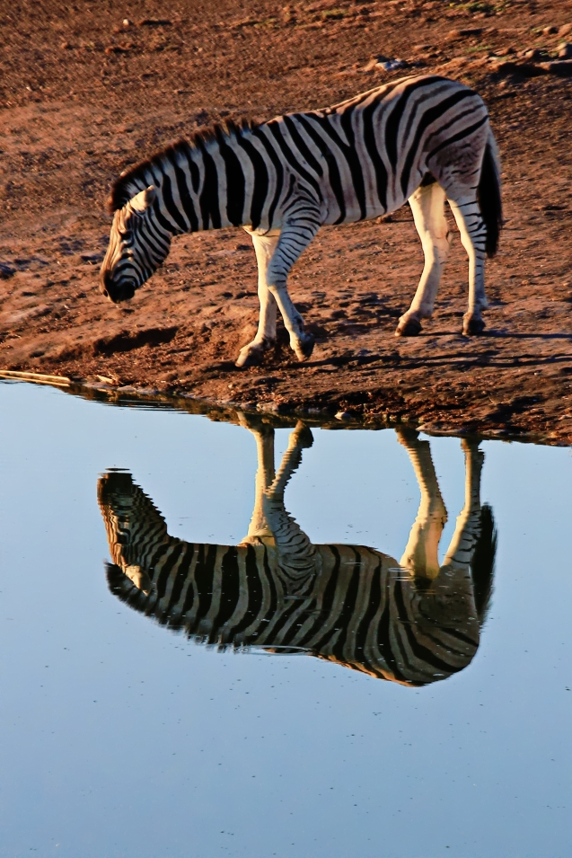 Refections