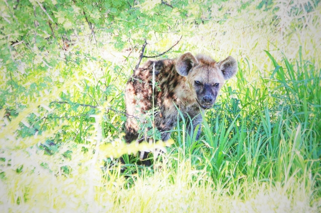 Hyena...so ugly it's almost cute