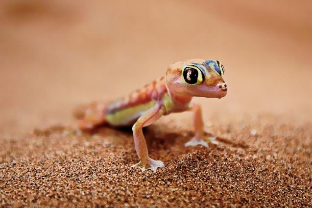 Pretty little lizard