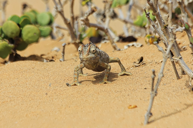 Comma comma comma chameleon.....