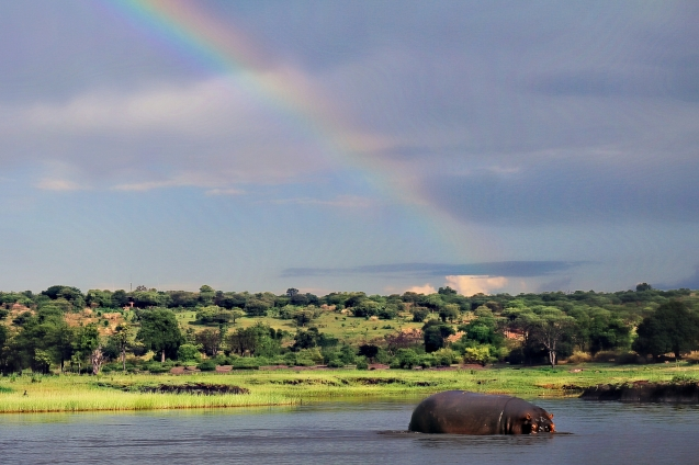 Rainbow over a hippo on the Chobe River