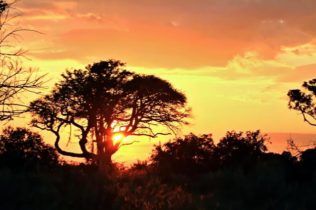 Sunset over the Okavango Delta