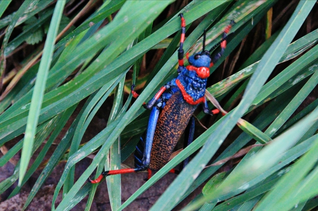 Africa boasts some of the most beautiful bugs!