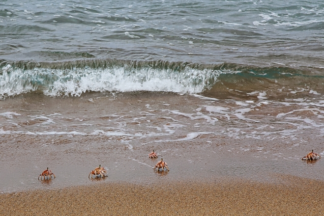 crabs playing on the beach