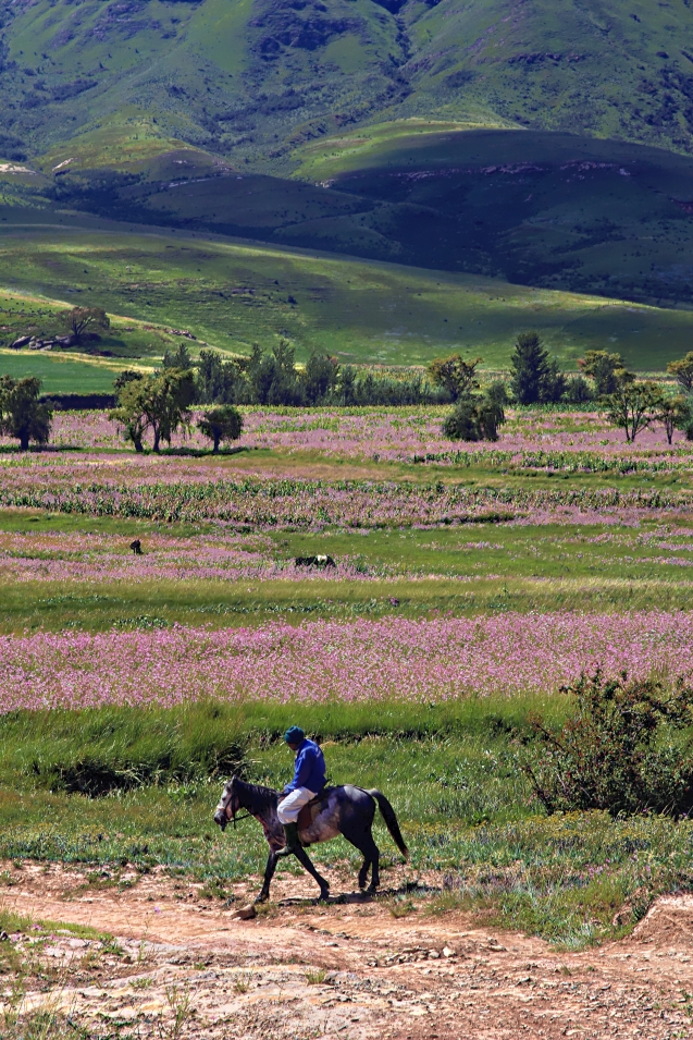 Horse and rider, flowers and mountains