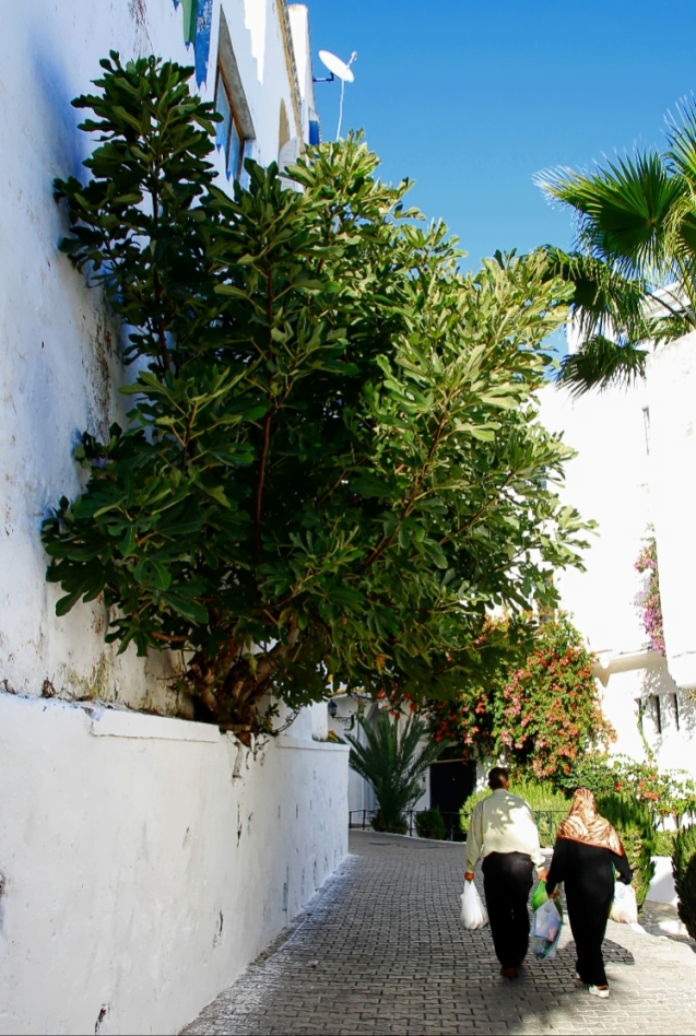 A fig tree growing out of a wall