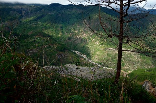 Kiltepan view of the rice terraces
