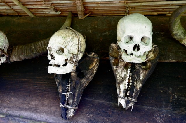 Skulls of Japanese soldiers from WW2. Trophies.