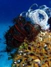 Beautiful soft corals everywhere