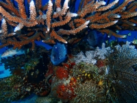 damsel fish in coral