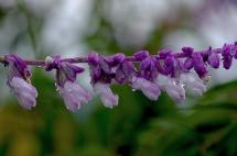 Camino flowers