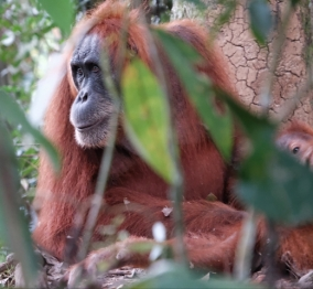 Jungle trek, Eco Travel Bukit Lawang, Sumatra