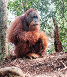 Eco Travel Bukit Lawang, Sumatra