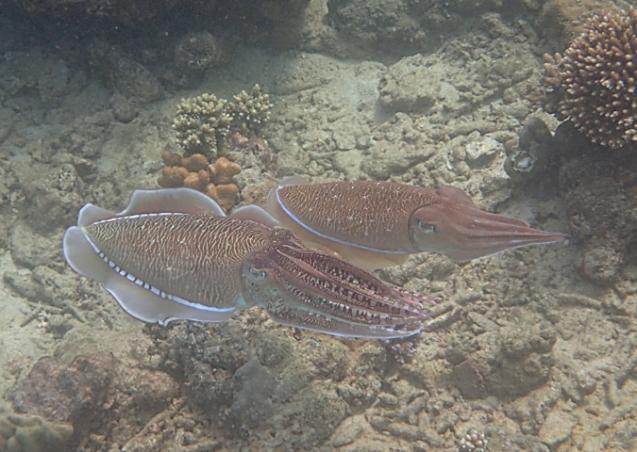 Pulau Weh, Sumatra Snorkeling