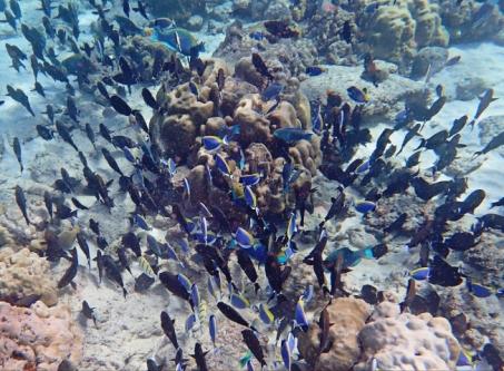 Pulau Weh, Snorkeling, Sumatra