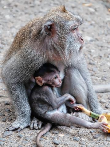 Sacred monkey forest, Ubud, Bali, Indonesia