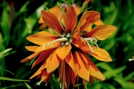 Flower dome beauty