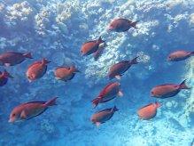 Snorkeling Coral Beach Eilat