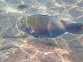Snorkeling Eilat