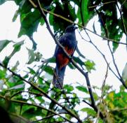 Dominical Baru Nature reserve