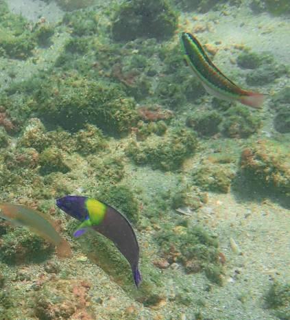 Uvita, whale tale snorkeling