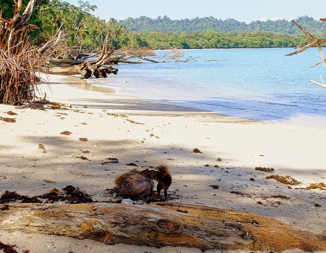 squirrel on the beach in Cahuita national park